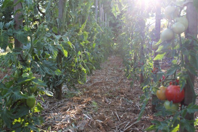 Nachhaltige Entwicklungshilfe via Social StartUp Africa GreenTec - Solaerenergie ernten