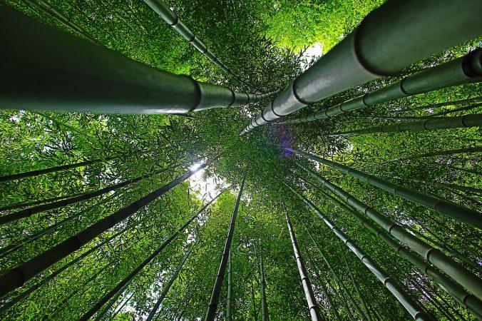 Geschäftsidee Bambus als Pulver in kompostierbaren Tassen