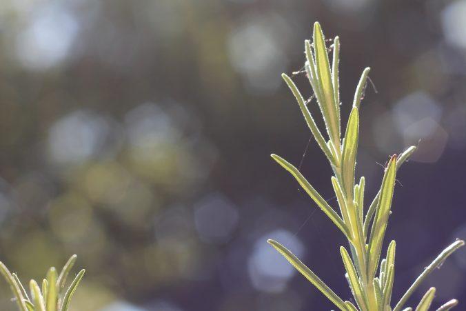 Frische Blumen ohne Sauerei auf dem Balkon liefert das Startup Blumixx