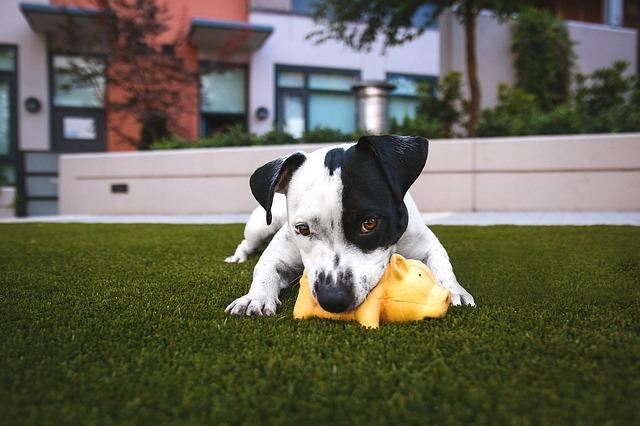 Ein Hundeklo aus echtem Rasen (Hund spielt auf Wiese)